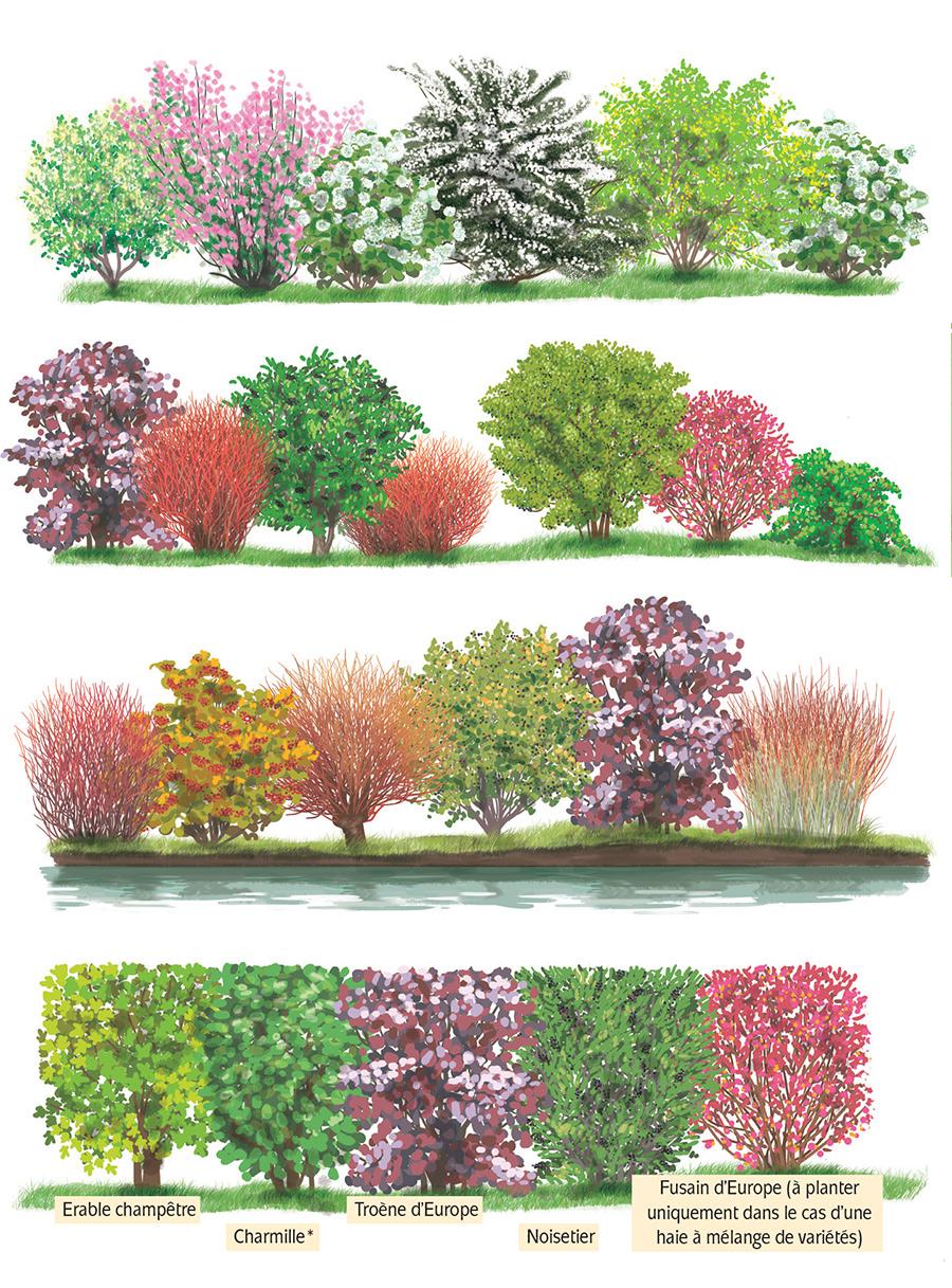 Arbuste Fleuri Feuillage Persistant qopo